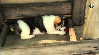 Планета собак. Тайский банкев