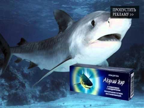 сколько стоит акулий жир для суставов цена