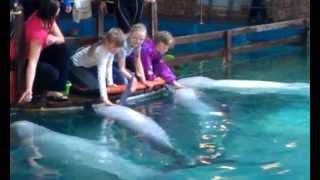 Ярославский дельфинарий май 2013(Общение с дельфинами после представления., 2013-05-14T18:55:02.000Z)