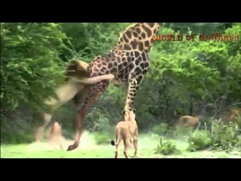 驚くべき動物   Amazing Animals   Moments, Compilation 2013 March