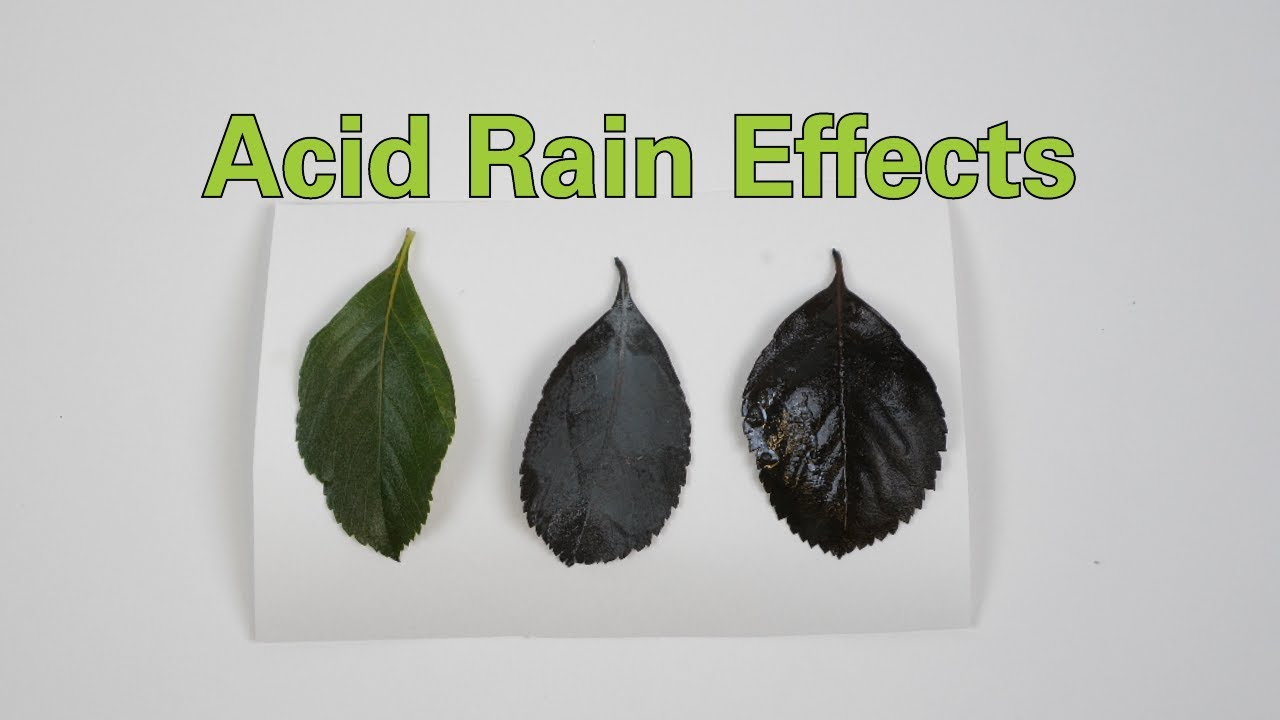 acid rain effects activity teachengineering mini acid rain diagram [ 1280 x 720 Pixel ]