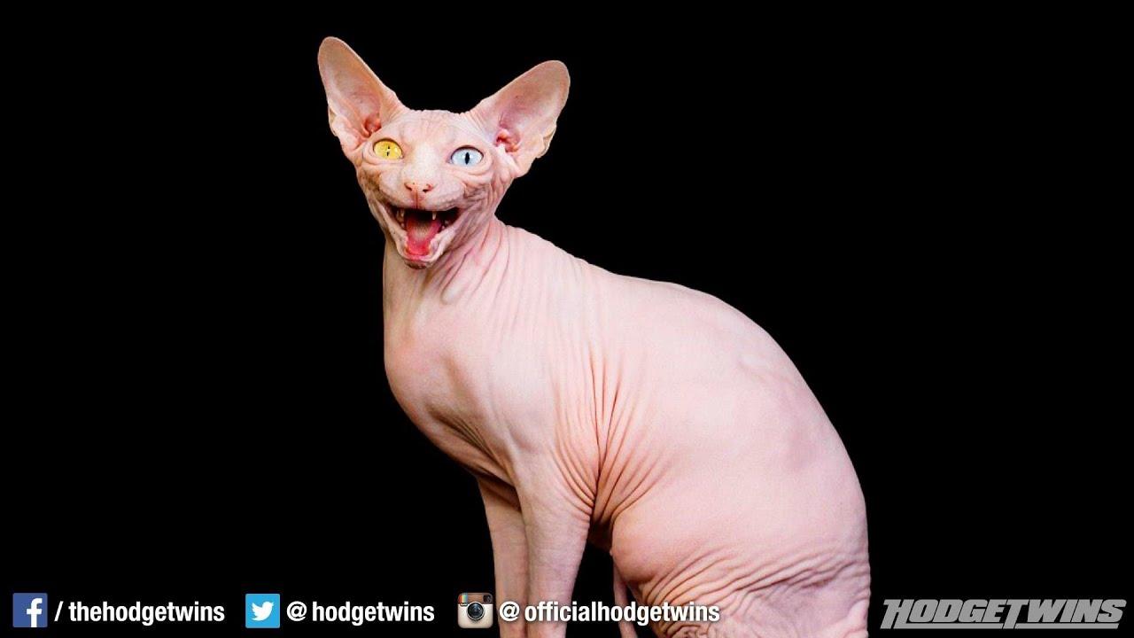 Ugliest Cat Ever @hodg...
