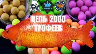РУССКАЯ РЫБАЛКА 4 RF4 ТРОФ ЯЗЬ ОСТАЛОСЬ 201 ЦЕЛЬ 2000 ТРОФЕЕВ