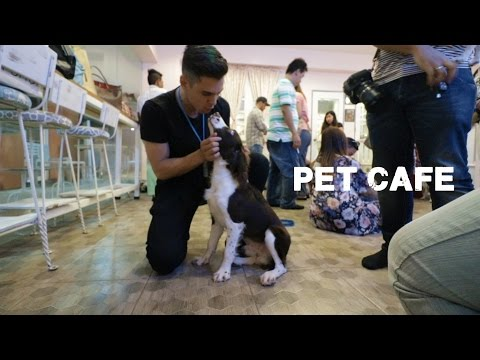 Cute dogs of Manila (Philippine vloggers Christmas meetup)