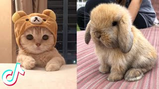 Cute TikTok Pets that Will Brighten Up Your Day