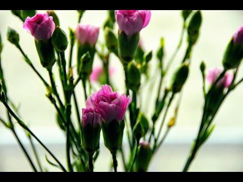 Весна с Ботаническом саду (фото).Spring in the Botanical Garden (photo).