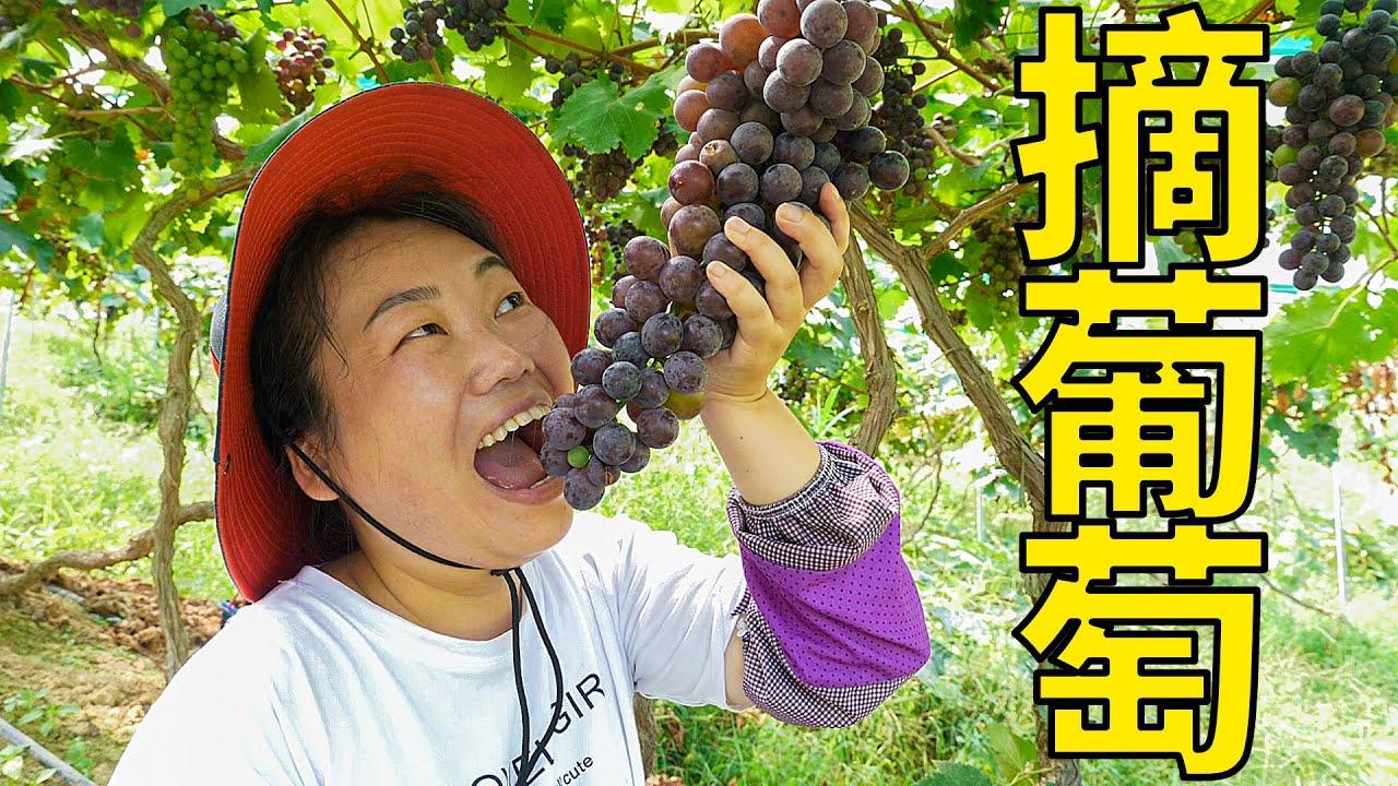 舅公帶我們去摘葡萄,媳婦這回吃過癮,摘的過程嘴巴沒停過 | Picking grapes, many varieties of grapes, delicious