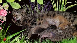 Кошка родила котят.