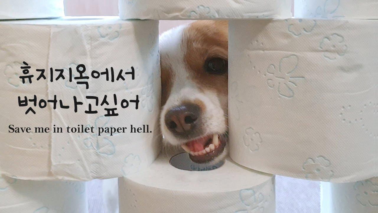 요즘 유행하는 강아지 장애물 넘기 챌린지 Dog's obstacle challange
