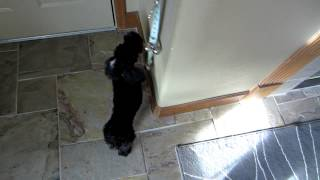 Toki rings the poochie bell to go potty