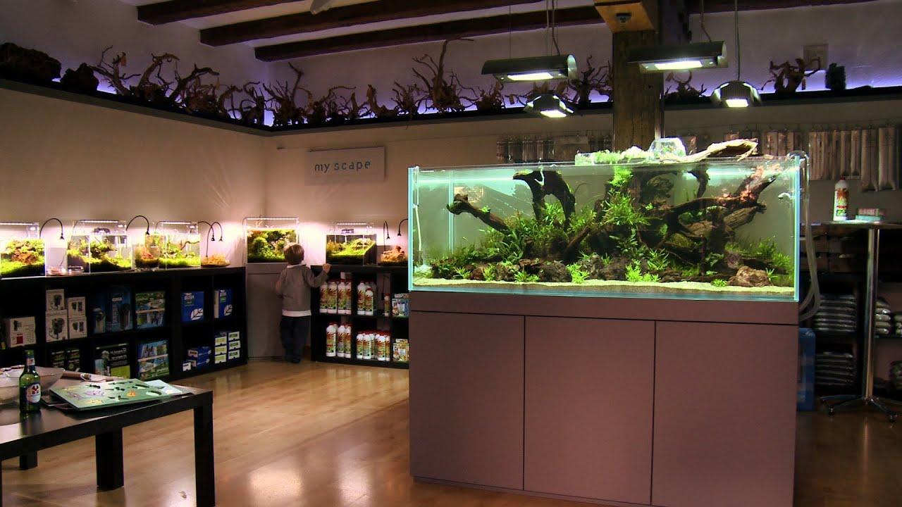 Animalisch die tiersendung nr 10 der erste aquascaping for Aquaristik shop