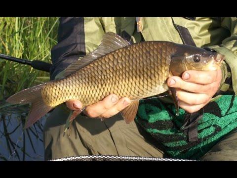 Ловля рыбы фидером
