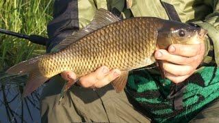 видео Ловля карася и всё что нужно знать об этой рыбе