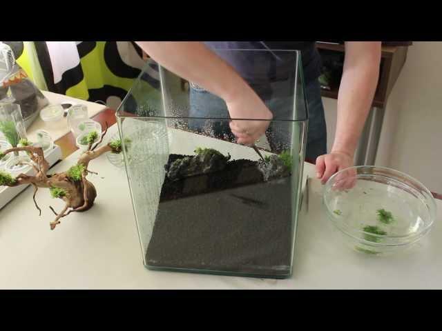 Aquarium Einrichtung Nano Cube 30l Zeitraffer