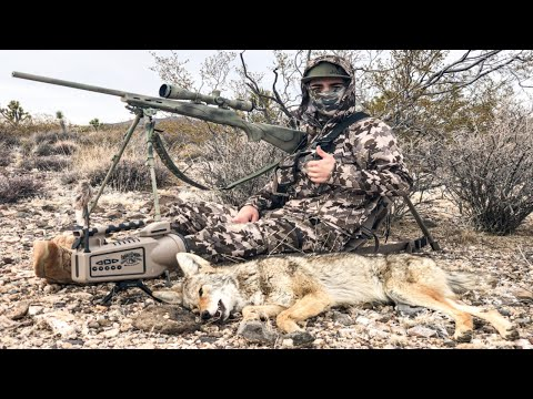 Putting Dogs To Sleep! COYOTE HUNTING