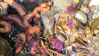 해산물 종합장소 sekiu Washington stat…