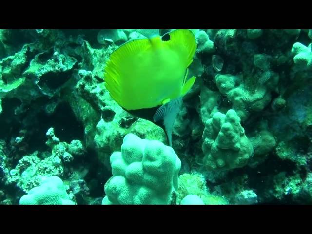 Big Island Dive sites - Honaunau