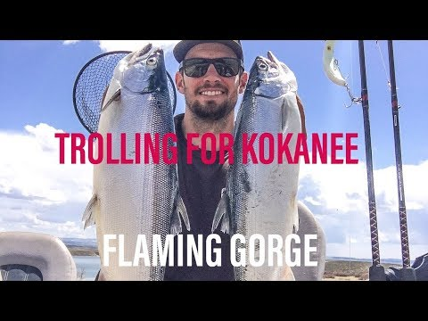 TROLLING FOR KOKANEE On Flaming Gorge