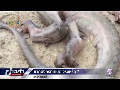 ชัวร์ก่อนแชร์ : ซากมังกรทิเบต จริงหรือ? | สำนักข่าวไทย อสมท