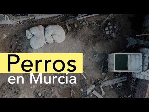 Perros en Murcia