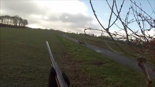 Battue aux chevreuils avec beagles, en Bretagne. HD