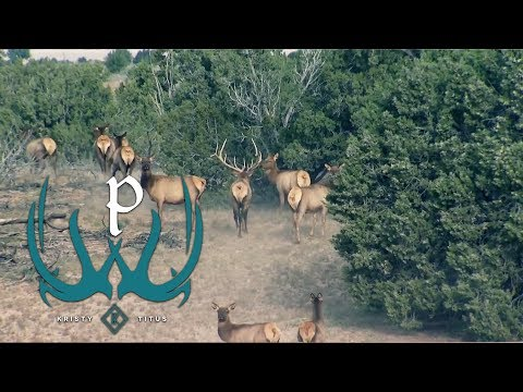 General Elk Hunting Tips With Kristy Titus