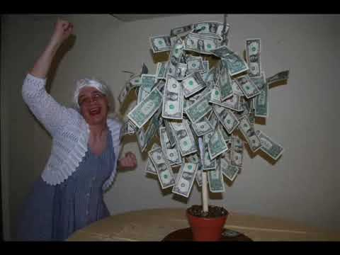 The Money Tree