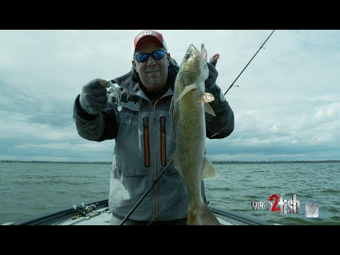 Trigger Walleye With Swimbaits Rigged on a Jig