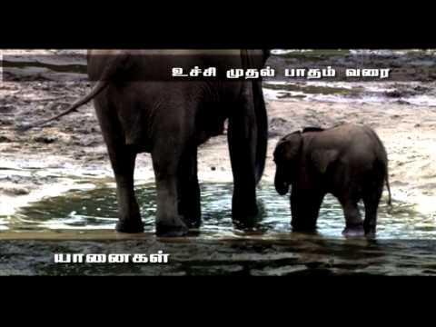 Award Winning Documentary Elephants the Intelligent Animal and Elephant's Life Cycle