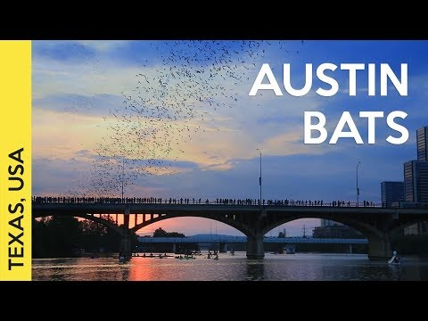 1.5 million bats in Austin, Texas | 2017 video