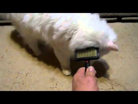 Кот расчесывает усы