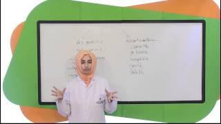 İlköğretim 4. Sınıf Sosyal Bilgiler Eğitim Seti Deneme Video