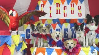 DOG CIRCUS IS COMING TO TOWN