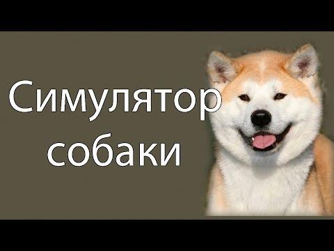 Видео Игра симулятор собаки онлайн бесплатно