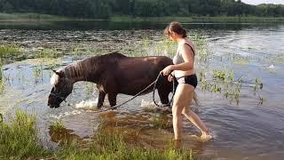 Лошадь Джина из хозяйства Дианы Голуновой. Серебристо-вороная красавицаДжина принимает летние ванны.