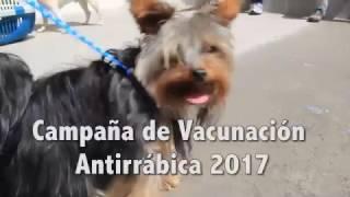 Campaña de vacunación antirrábica
