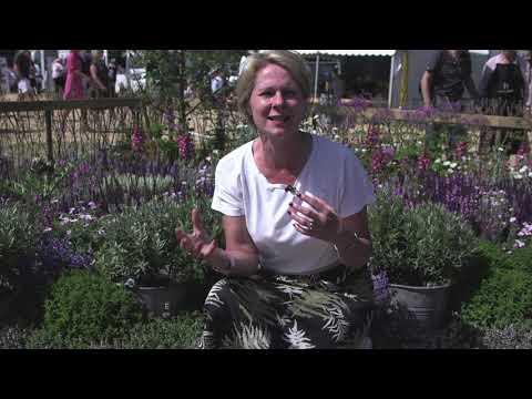 Cph Garden 2019 this is Copenhagen Garden - Charlotte Garby , Haveselskabet berättar