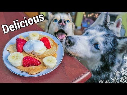 PANCAKES DOG TREATS DIY How to make Pancakes for Dogs | Snow Dogs Snacks 42