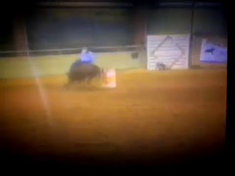 Barrel Horse For Sale. Rodeo Ready! --Billy