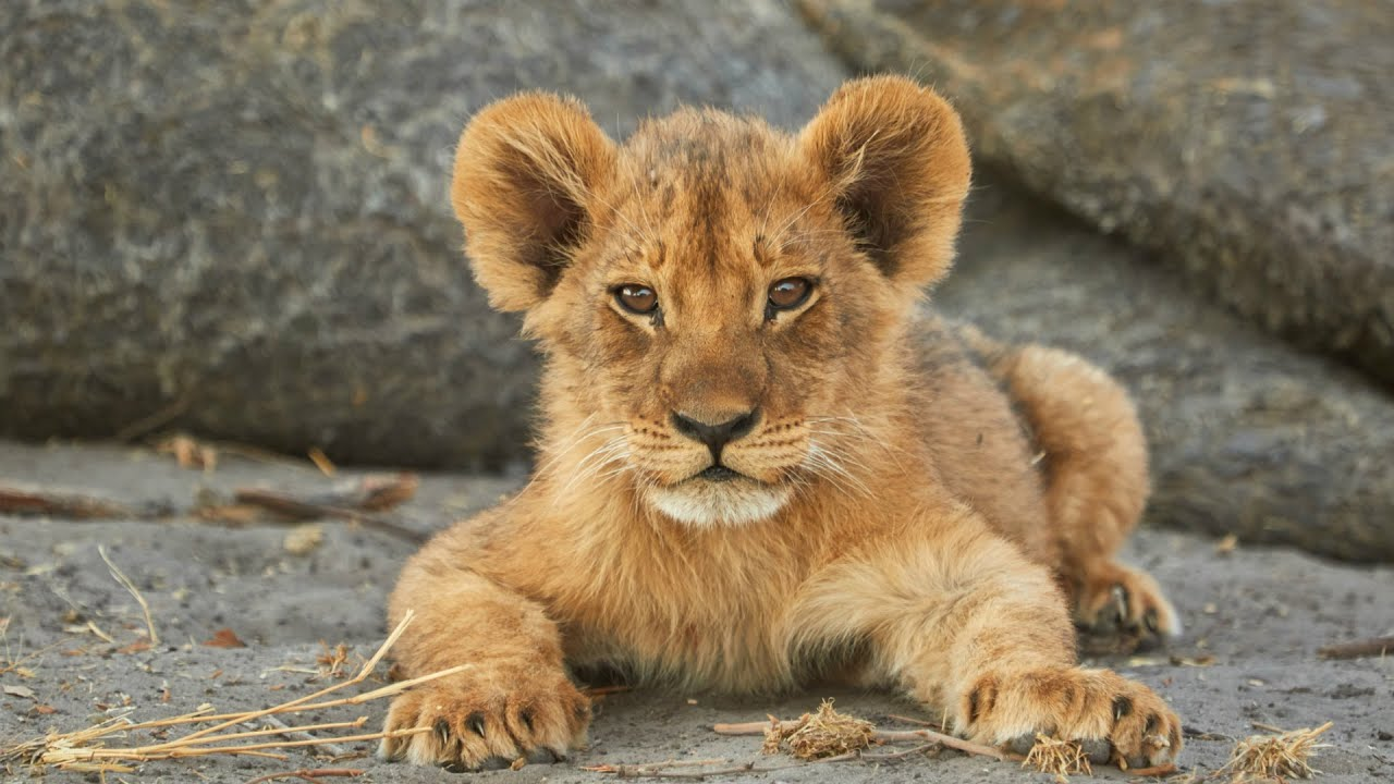 The Lion King 2019: 3 Real-Life Animals That Inspired 'The