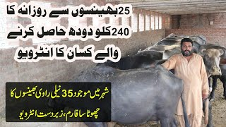Small Diary Farm | Diary Farming in Urdu | Buffaloes Farming | Simple Buffaloes Farm | Farming Tips