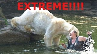 When Animals Attack 2016!!! (EXTREME CONTENT)