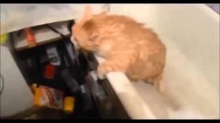 Смешные кошки №6, подборка 2014, в хорошем качестве