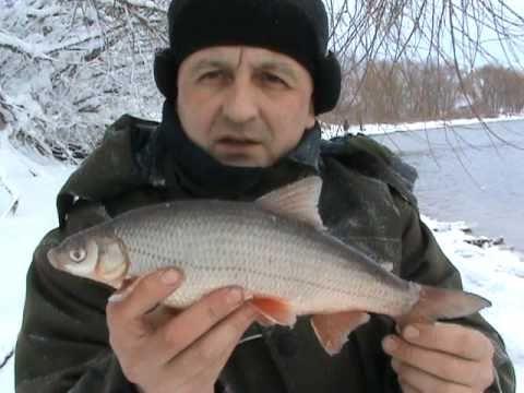 видео рыба подуст
