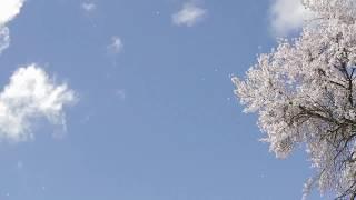"""стихи Эдуарда Асадова """"Когда на лице твоем холод и скука..."""""""