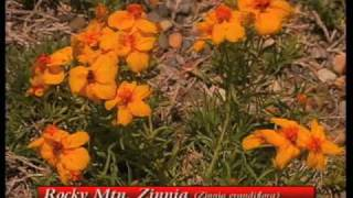 How To Choose Plants For Xeriscape Garden