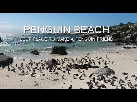 Meet the penguins at Boulders Beach