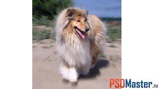 Как размыть фон в фотошопе(Текстовая версия: http://psdmaster.ru/materials/122 Из этого видео вы узнаете как размыть фон в фотошоп. Мы рассмотрим..., 2010-07-14T17:06:27.000Z)