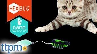 Hexbug Nano Robotic Cat Toy from Hexbug