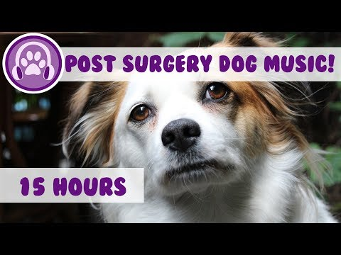 Relaxing Music To Calm Dogs Post Surgery! - Soothing Melodies To Help Recovery (2018)
